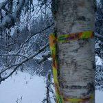 Unika svämskogar med nya insektsarter avverkas - inga pengar finns till skydd
