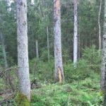 """Nytt initiativ: """"Sundays for Forests"""" uppmärksammar skogen"""