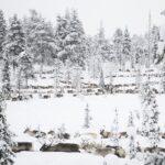 25 organisationer i debatt i Aftonbladet: Vi stöder samernas kamp mot skogsbolagen