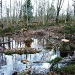 Skötselåtgärder skadade kommunens naturreservat