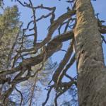 Skogsnätverket Mycel kämpar för skogar i Skellefteå