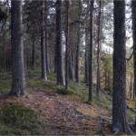Öppet brev: Sveaskog, respektera Maskaure samebys nej