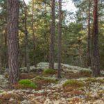 Värdefull tätortsnära skog hotad i Oskarshamns kommun utan samråd