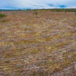 Skogsbrukets skador på samhället