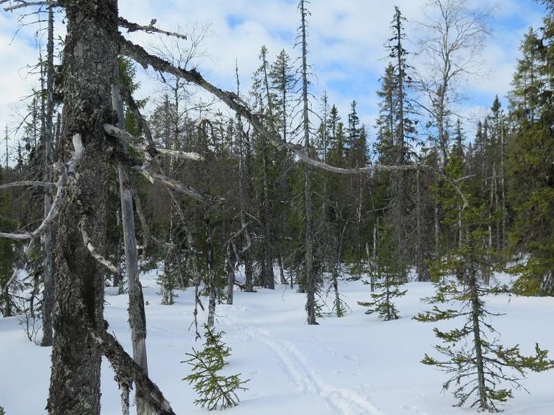 Gammelskog vid Äggfloten står oskyddad
