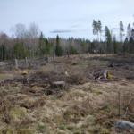 Ytterligare nyckelbiotop i Kalmar län delvis avverkad