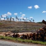 Skydda Skogen om skogsutredningen – lägg den i papperskorgen