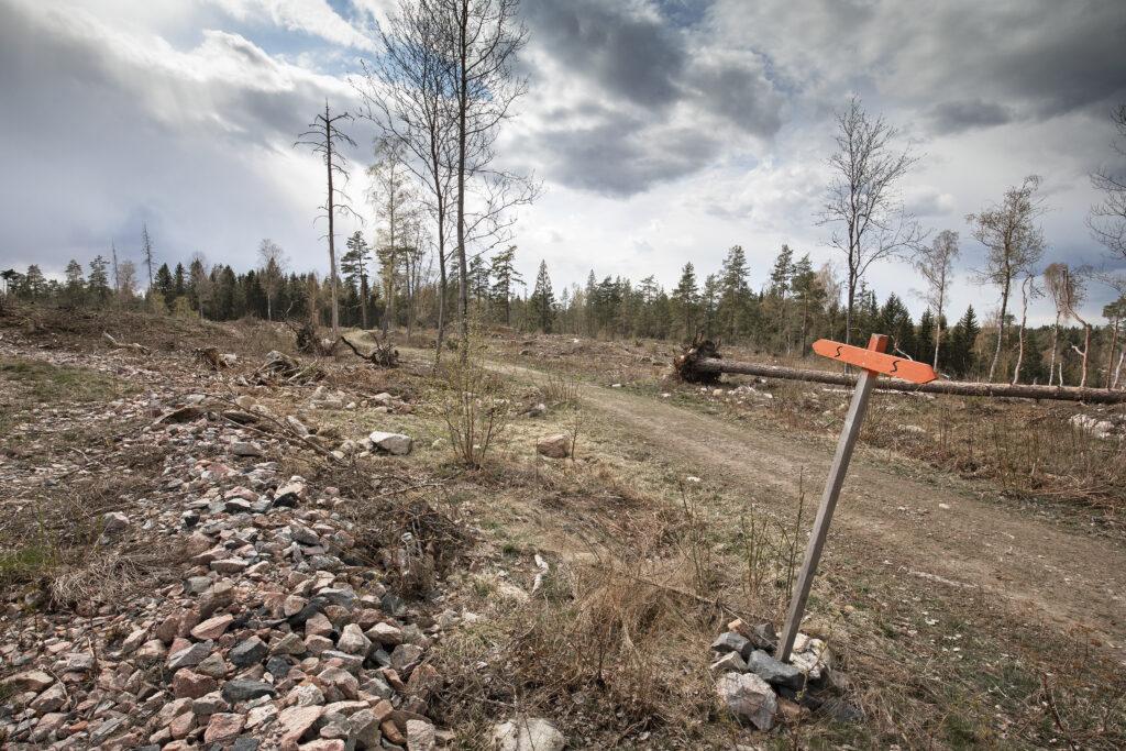 Sörmlandsleden ligger nu på ett kalhygge vid Bälgviken Sörmland