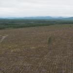 Debatt: Den statliga skogsutredningen en fara för biologisk mångfald