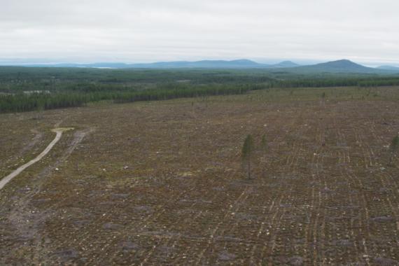 Frihet under ansvar - stort kalhygge efter att det FSC-certifierade statliga skogsbolaget Sveaskog har avverkat skog i Norrbotten. Foto: Björn Olin / www.helifilm.com