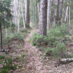 Sveaskog återkallar avverkningsanmälningar efter FSC-klagomål