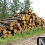 Skydda Skogen kritiserar EU-direktiv: Förbränning av biomassa är inte klimatneutral!