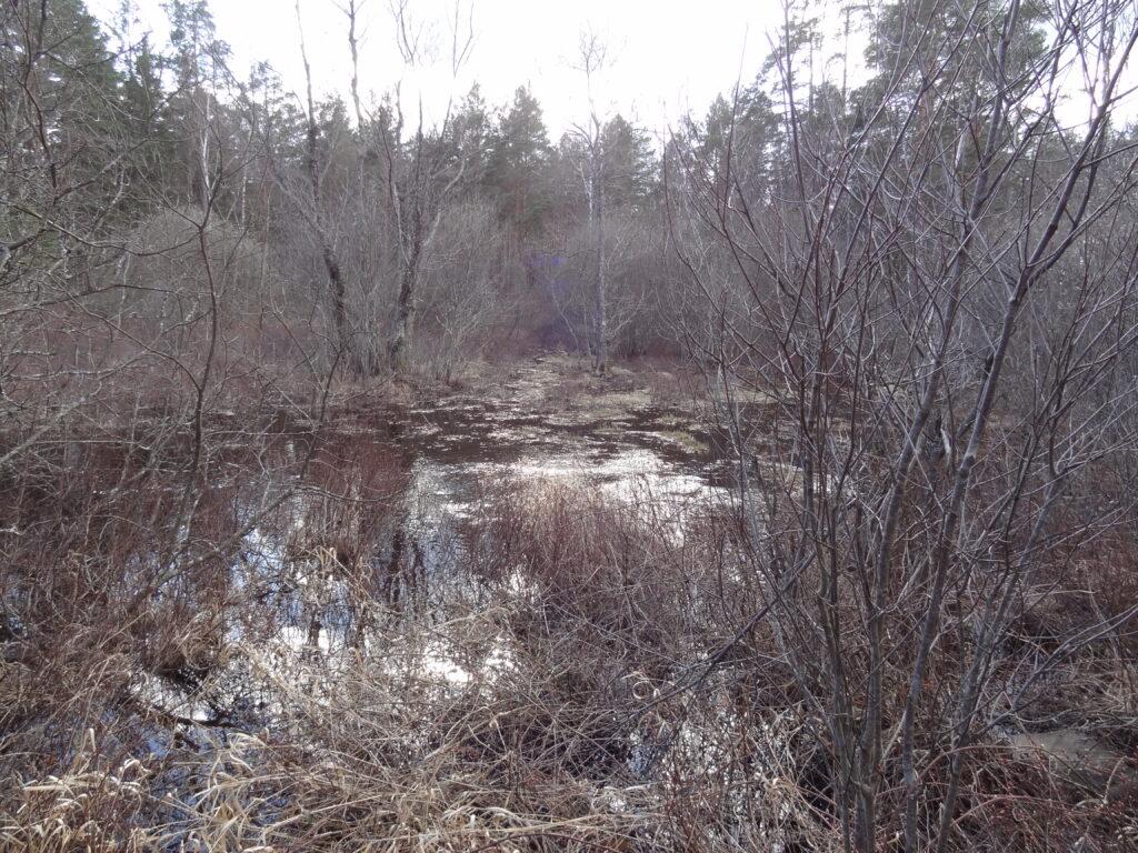Våtmark i Äpplerumsån, Oskarshamns kommun.