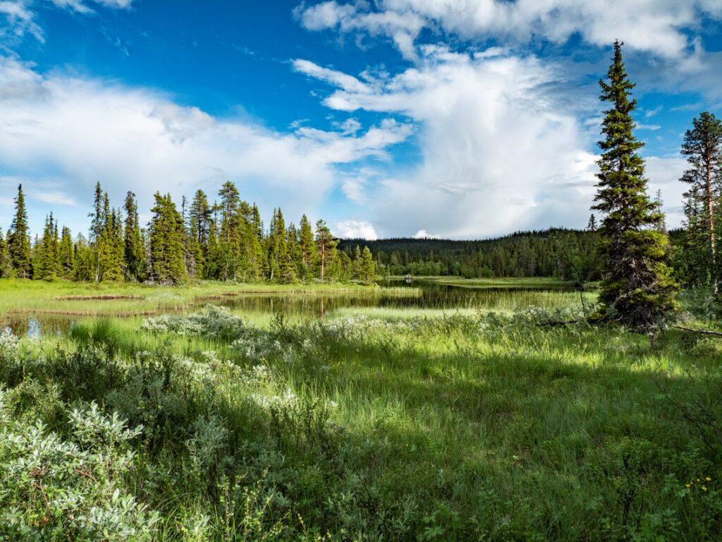 Denna bild har ett alt-attribut som är tomt. Dess filnamn är skyddaskogen.se_forestry-at-the-edge-jon-andersson-1024x768.jpg