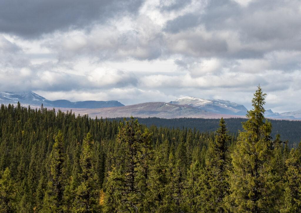 Denna bild har ett alt-attribut som är tomt. Dess filnamn är skyddaskogen.se_forestry-at-the-edge-jon-andersson3-1024x725.jpg