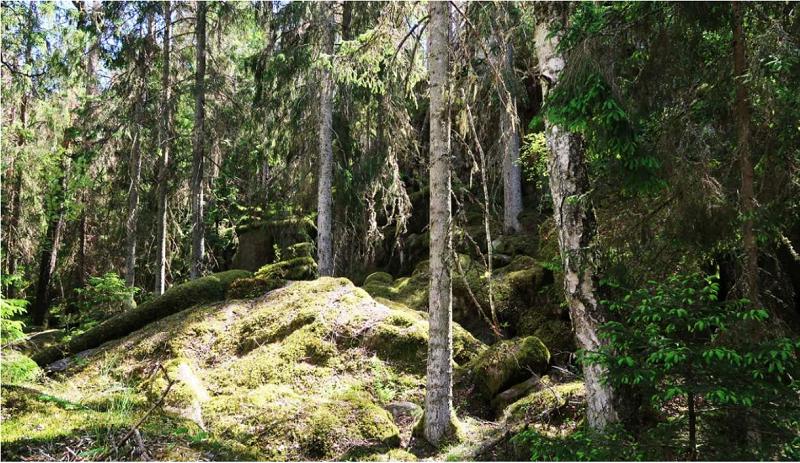 Oskyddad grannaturskog kring Gallsjön. Foto: Jan Brenander.