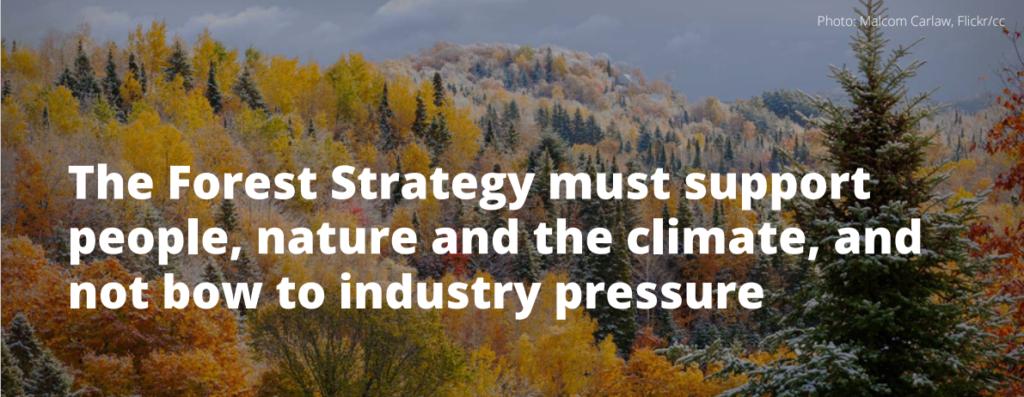 EU:s skogsstrategi måste stödja människor, natur och klimatet. Inte böja sig för industrin.