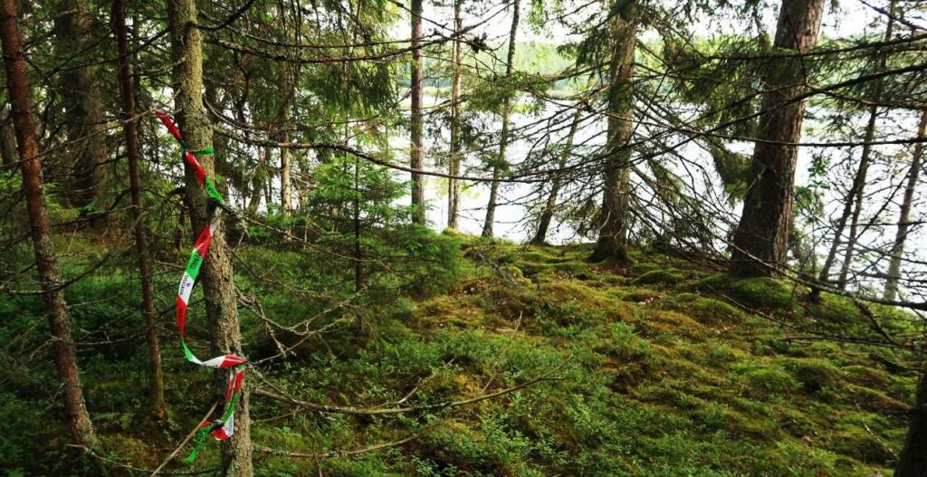 En rödgrönvit  snitsel hänger i ett träd nära sjön
