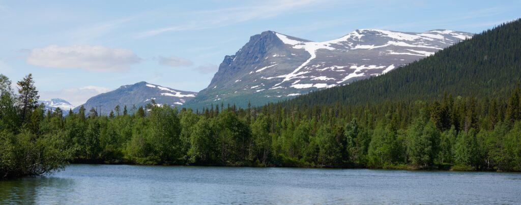 Pärlälvdalens fjällurskog sedd från vattnet.
