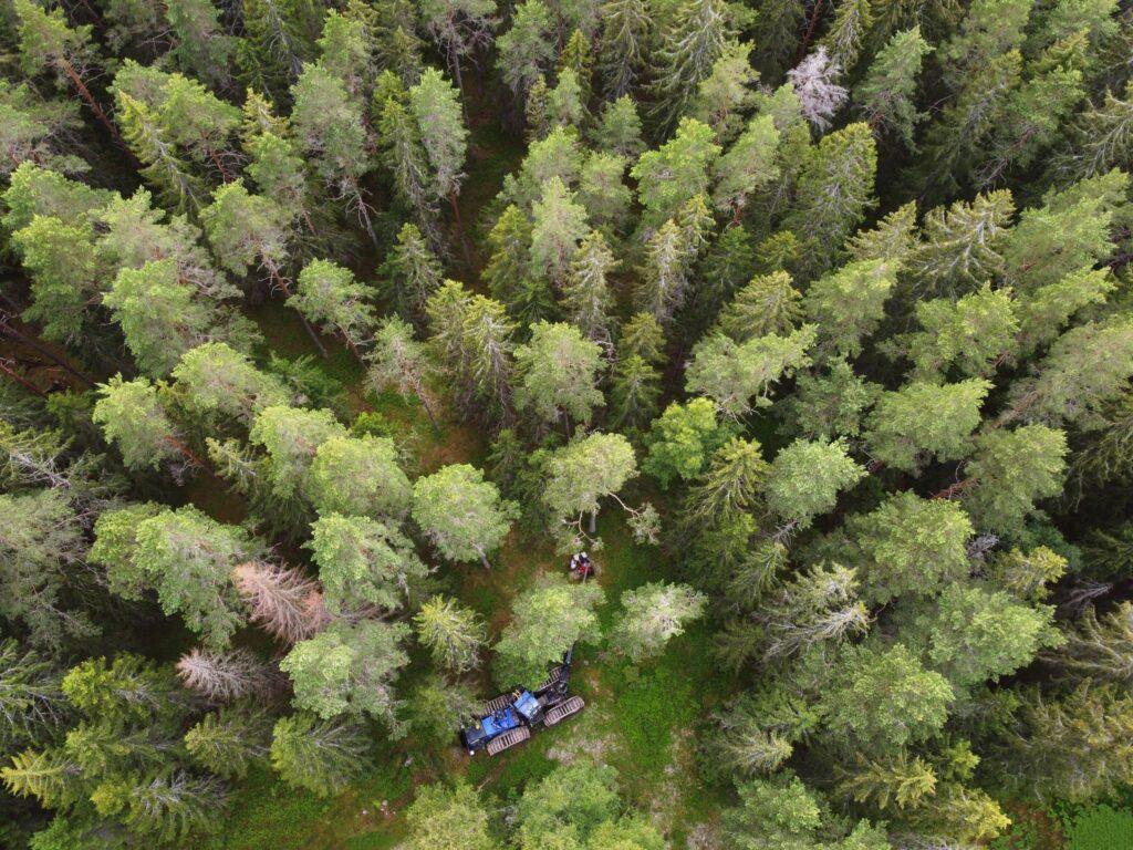 Skogsmakinen syns i bild ovanifrån. Bara enstaka träd är angripna av granbarkborre.