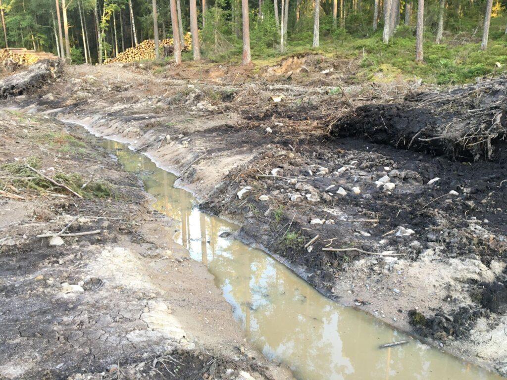 En bäck som rann intill knärotsskogen är nu utdikad med grävmaskin.