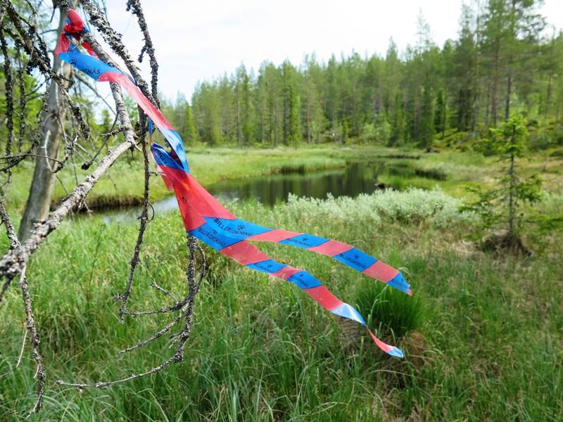 BillerudKorsnäs har hängt band i skogen som markerar att en väg ska dras mellan två myrholmar i Orsa kommun.