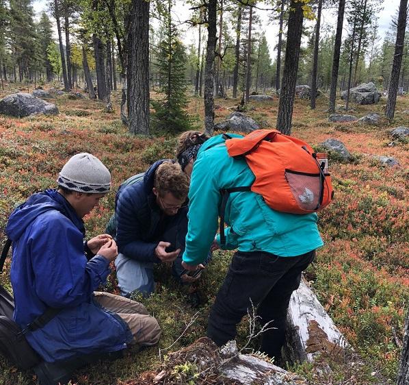 Isak Vahlström, Julian Klein och Birgitta Tulin kollar på en vedsvamp som fanns under en låga.