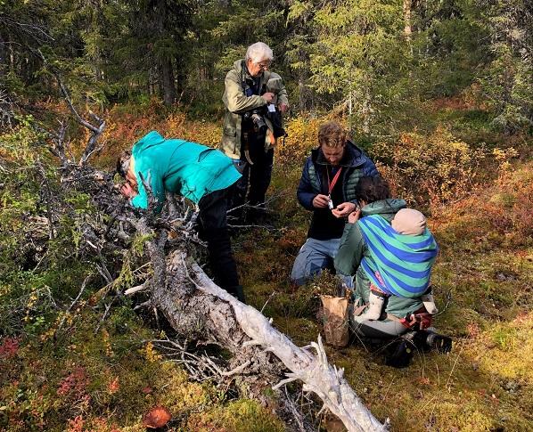 Birgitta Tulin, Björn Mildh, Julian Klein och Barbara Kuehn med sonen Arvid på ryggen kollar på vedsvamp från under en granlåga i en av de hotade skogarna.