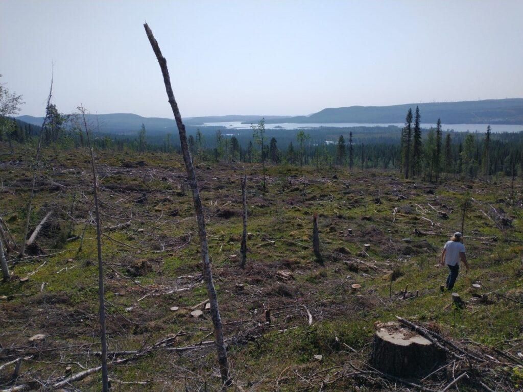 Sveaskog avverkade nyligen en nyckelbiotop som nu är ett kalhygge. Den avverkade skogen var klassad som naturvärdesklass 2 Högt naturvärde (Svensk standard).