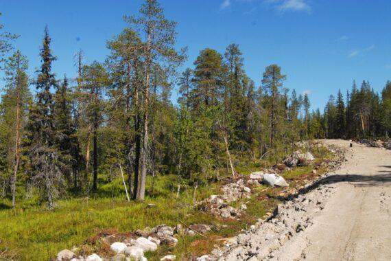 Nybruten väg genom naturskog av nyckelbiotopsklass. Foto: Björn Mildh.