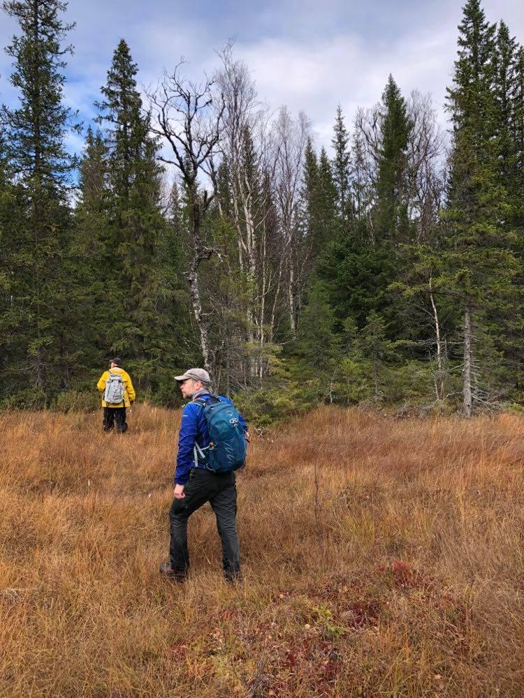 Två deltagare i inventeringen går över en myr. Även skogsholmar på myren är avverkningsanmälda.